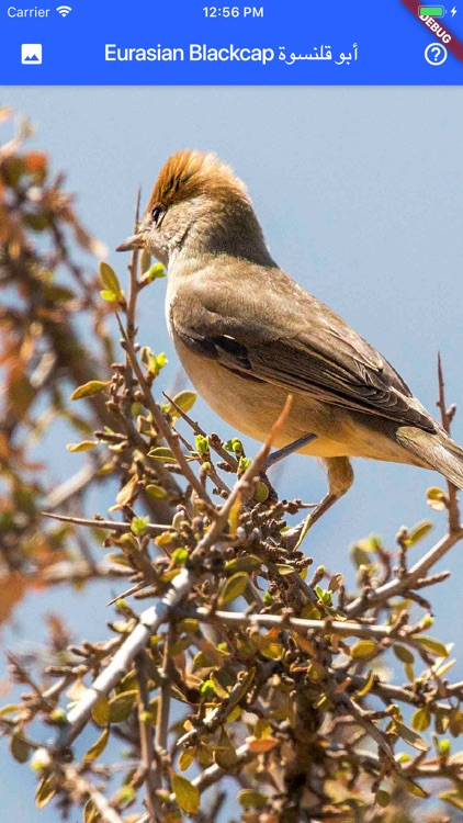 Birds of Jordan screenshot-5