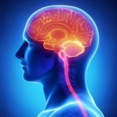 Activities of Human Anatomy : Nervous System