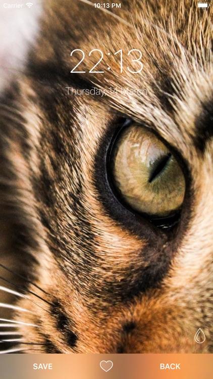Cat Wallpapers ° screenshot-4