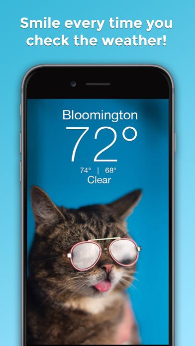 Lil BUB Cat Weather Reportのおすすめ画像1