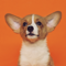 App Icon for Good Boi! Puppy Sound Training App in India App Store