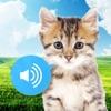 的动物声音(图像&声音)