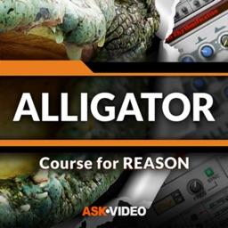 Alligator Course For Reason