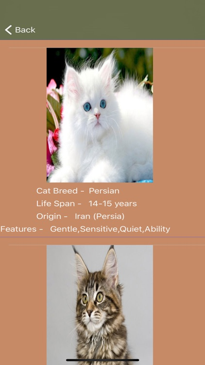 Cat Breeds - Identify your Cat screenshot-5