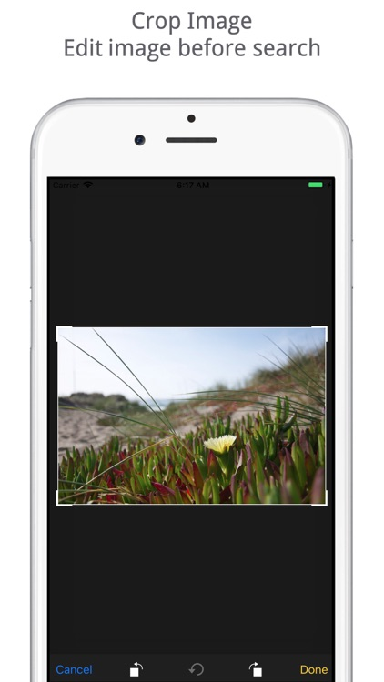 Reverse Image Search Tool