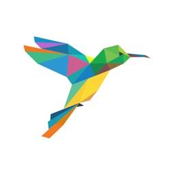 Hummingbird Field Notes