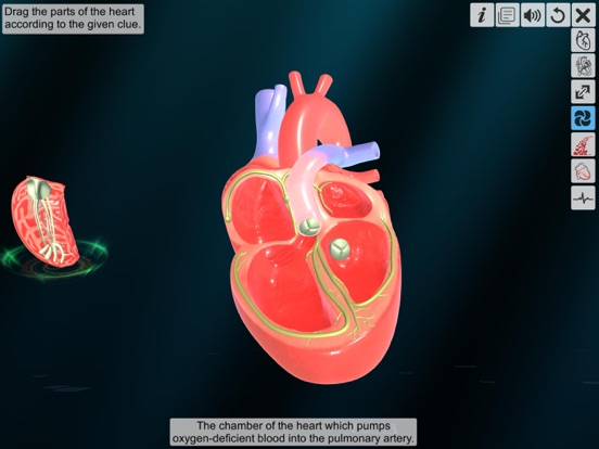 Heart - An incredible pump screenshot 11