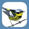 Sibley Birds 2nd Edition