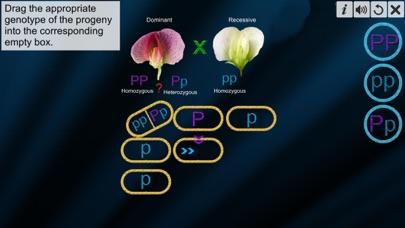 Test Cross: pea flower screenshot 5