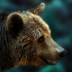 Activities of Bear Escape