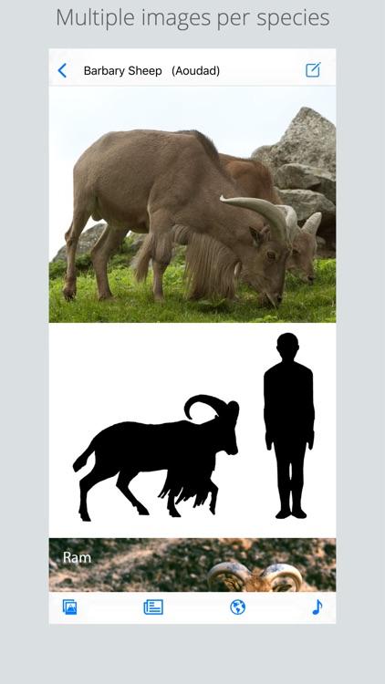 Stuarts European Mammals