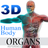 3D Human Body Organs Reference - USaMau03