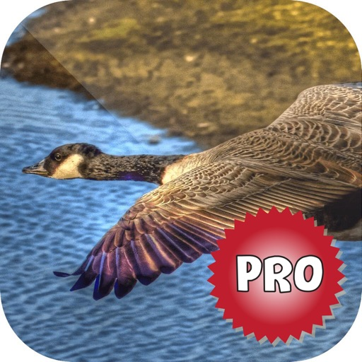 Easy Duck Hunting Calls Pro: Finest Hunting Call