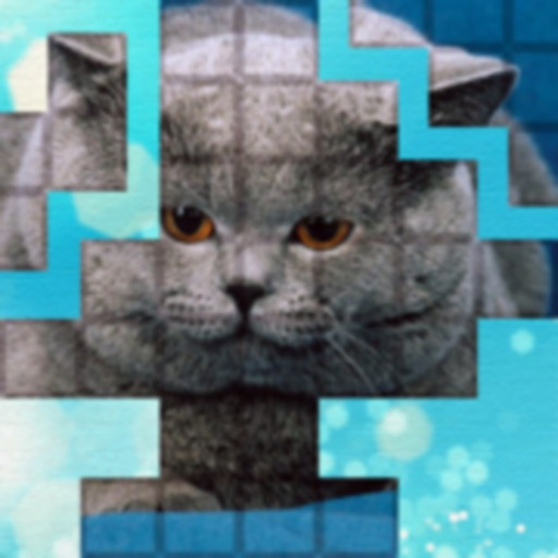 PicPu - Cat Picture Puzzle icon