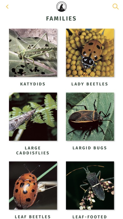 NWF Guide to Insects & Spiders