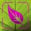 Plant Disease Identifier