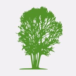 My Family Tree Creator