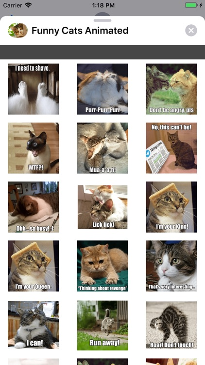 Funny Cats Animated Stickers