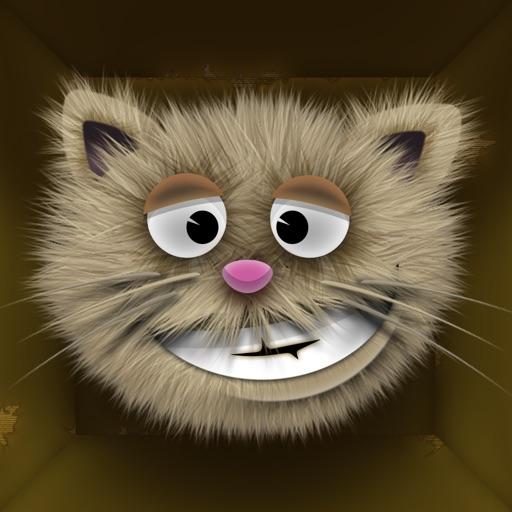 Schrode the Cat