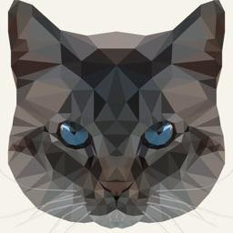 Frankie by Creativecrap