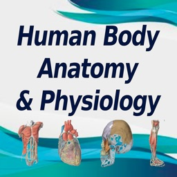 Human Body A&P Practice Test