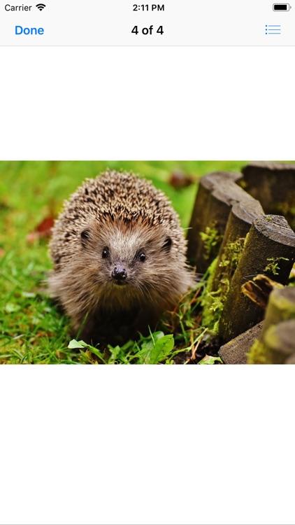 My Hedgehog Stickers screenshot-5