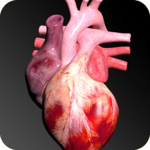 Circulatory System 3D Anatomy