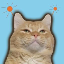 Cat animated emoji stickers