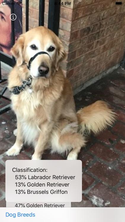 Dog Breed Camera