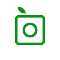 PlantSnap - identify plant