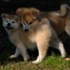 瞬間 - Time of dogs. - iPhoneアプリ