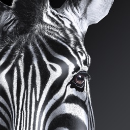 Investec Business Banking