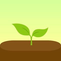 Forest - Restez Concentré analyse, service client