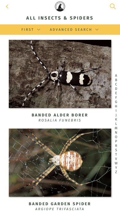 NWF Guide to Insects & Spiders 5