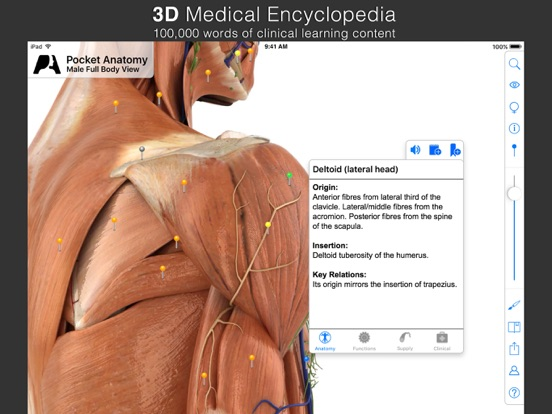 Screenshot #6 pour Pocket Anatomy.