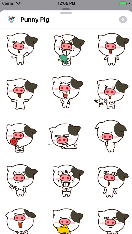 Punny Pig Animated Stickers