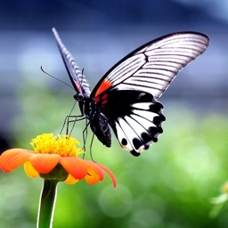 HD Wallpapers for Butterfly