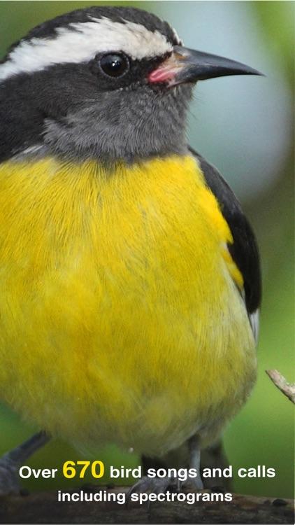 All Birds PR -> Antigua screenshot-3