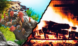 AquaFire : Aquarium Fireplace