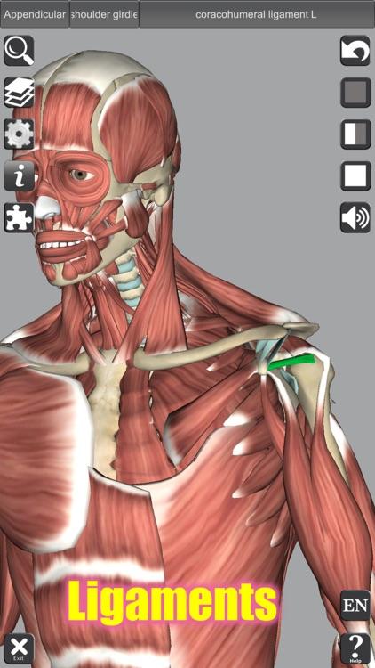 3D Anatomy screenshot-7