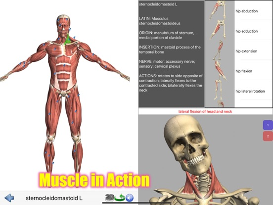 Visual Anatomy Lite screenshot