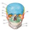 Anatomy Flashcard