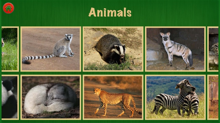 Animal Sounds For Fun
