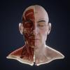 Kirill Chikalin - Lex: Human Head Anatomy  artwork