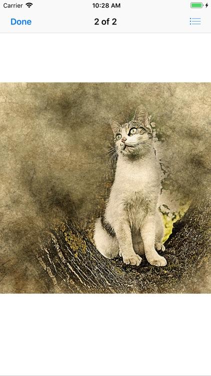 Cat Portraits screenshot-4