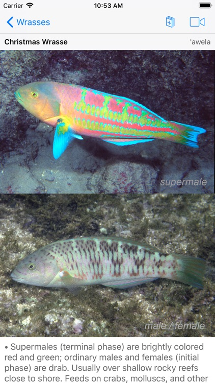 Snorkel Fish Hawaii for iPhone screenshot-9