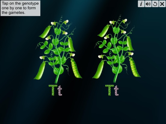 Monohybrid Cross screenshot 16