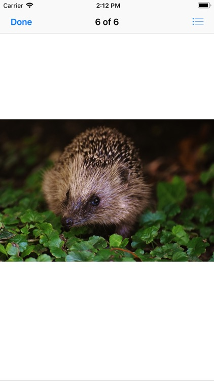 My Hedgehog Stickers screenshot-7