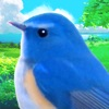 鳥マスター! - iPadアプリ
