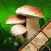 Mushroom Identification &Guide